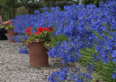External Rear Garden - Lady Looking At Flowers in Garden